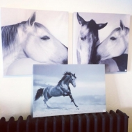 Horse Canvas $20 Each