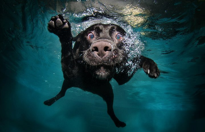 dog-in-the-water-9243